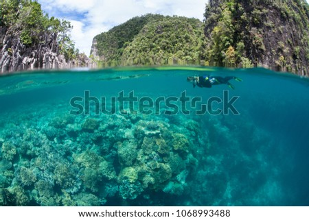A snorkeler explores a shallow, healthy coral reef thriving in Raja Ampat. This tropical region is known as the heart of the Coral Triangle due to its marine biodiversity.