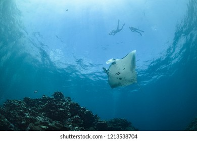 Snorkeler Swimming with Large Manta Ray Gliding over Cleaning  Station in Ishigaki, Okinawa Japan