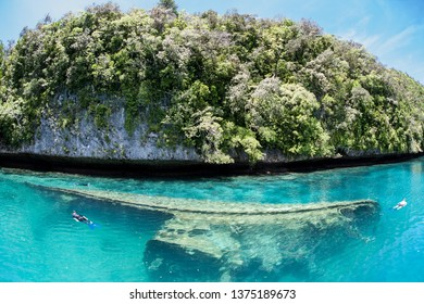Snorkelers explore a small shipwreck found among the Rock Islands in the Republic of Palau. Shipwrecks often serve as artificial reefs, attracting corals and fish.