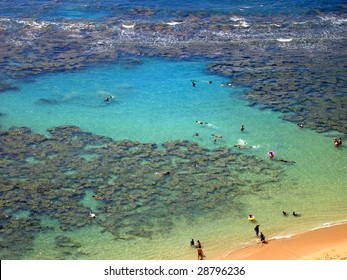Snorkelers and Families swimming around the coral at Hanauma Bay, Oahu, Hawaii