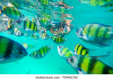 Snorkeling activity with beautiful colourful fishes. Langkawi Island, Malaysia. Soft focus & noise visible due to high ISO.