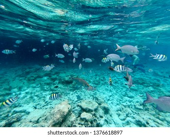 Snorkeling in crystal water at tropical island. Surrounded with sergeant major fish and lined surgeonfish.
