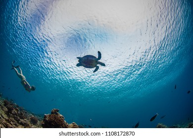 Snorkeling Girl watching turtle underwater against water surface underwater