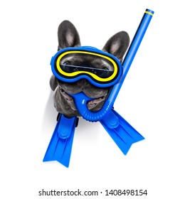 Snorkeling scuba diving french bulldog dog  with mask and fins ,  isolated on white background