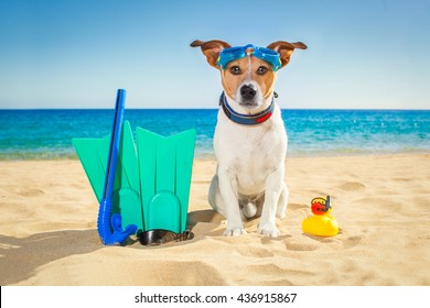 Snorkeling scuba diving jack russell dog  with mask  snorkel at the beach on summer  vacation holidays