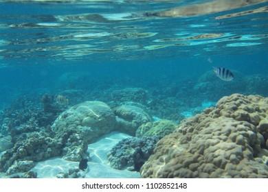 snorkeling, scuba diving watching lagoon underwater