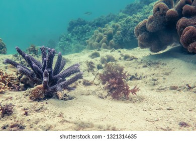 Snorkeling series. Purple Coral Landscape.