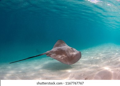 snorkeling with Stingray in french polynesia