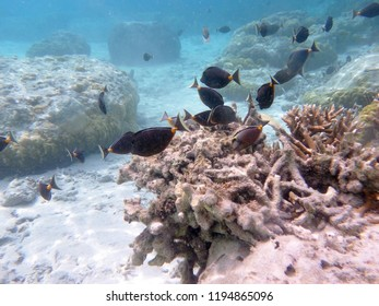 Snorkeling in Tumon Bay, Guam, Mariana Islands, USA