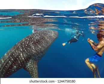 Snorkeling with whale shark. a number of tourist snorkeling with wild giant whale shark in the botubarani sea, Gorontalo island, Indonesia. Sunday (July 31, 2016).