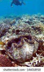 Snorkelling on Great Barrier Reef