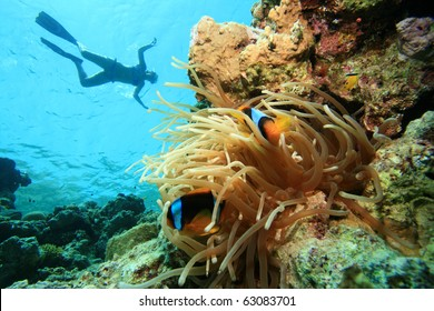Snorkelling over Clownfish