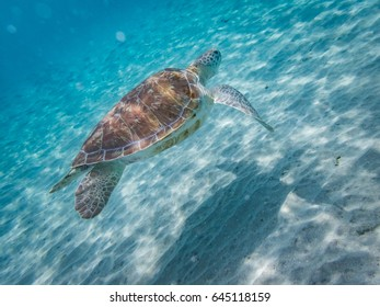 Snorkelling with turtles views around the Caribbean island of Curacao