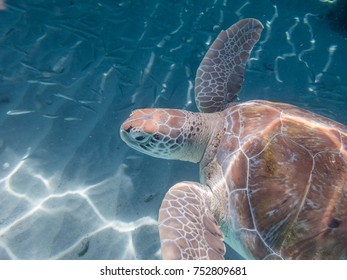 Snorkelling with turtles -   Views around the Caribbean island of Curacao