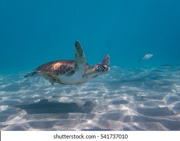 Snorkelling with turtles at Westpunt on the Caribbean Island of Curacao