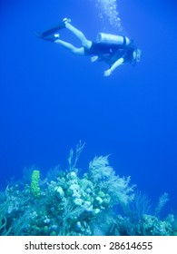 Snorking off the Galapagos Islands