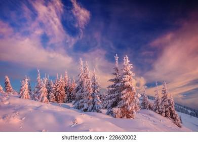 snovy trees on winter mountains
