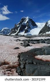 Snow algae in Antarctica