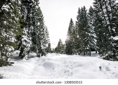 Snow in the alpine wood of the Asiago plateau on the Italian Alps