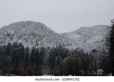 Snow around Bled in Slovenia