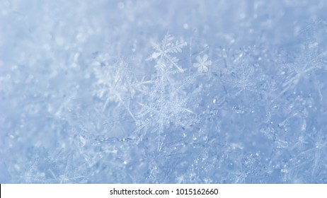 Snow background with detailed snowflakes. Macro photo of real snow crystals: large stellar dendrites with hexagonal symmetry, long elegant arms and thin, transparent structures.