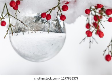 Snow Ball Winter Scene