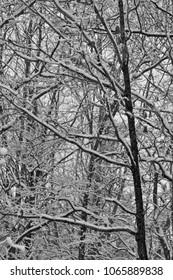 Snow in Black & White
