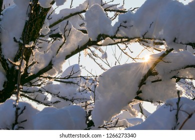 snow branch and sunrise