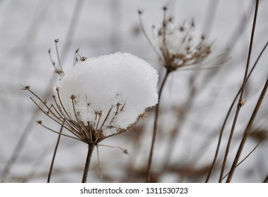 Snow capped dried flower textures
