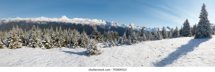 Snow capped mountains and trees at Bald Hills in Jasper National Park, Alberta, Canada.