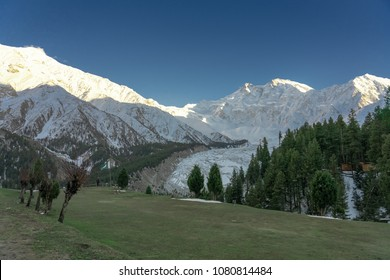 Snow capped - Nanga Parbat mountain peak in the evening with green grass meadoes and pine forrest in foreground, Fairy meadows, Gilgit, Balistan, Pakistan
