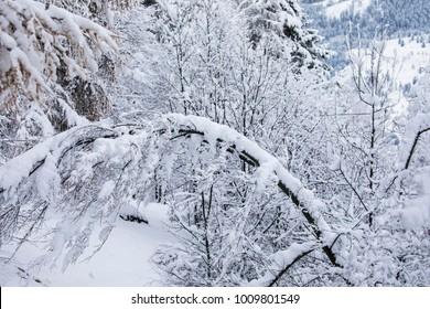 snow, Cavalese, Val di Fiemme, Trentino Alto Adige, Italy, Europe