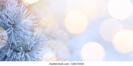 Snow Christmas tree and holidays light; Christmas tree background; real winter snow