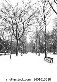 Snow in a city park, Commonwealth Ave, Boston