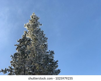 Snow covered beautiful fir tree in winter