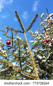 Snow covered fir tree with red christmas balls, blue sky above (selected focus)