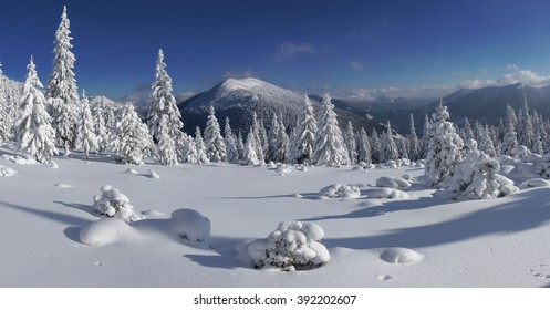 Snow covered fir trees on the background of mountain peaks. Panoramic view of the picturesque snowy winter landscape. Magnificent and silent sunny day.