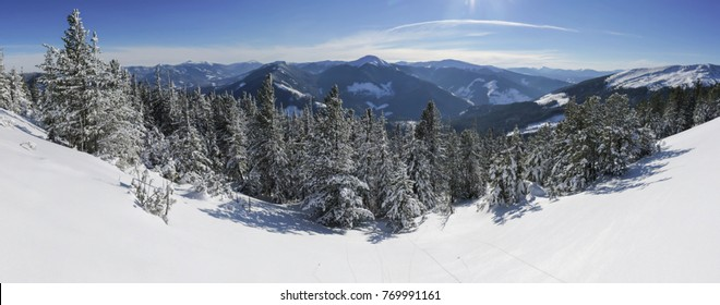 Snow covered fir trees on the background of mountain peaks. Panoramic view of the picturesque snowy winter landscape.