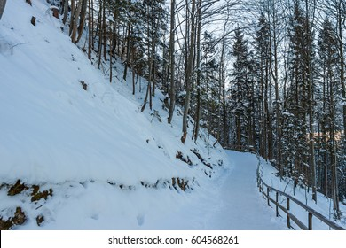 Snow covered footpath and trees in winter