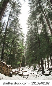 snow covered forest in kasol, himachal pradesh, India