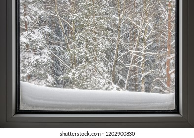 snow covered forest outside the window