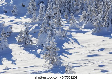 Snow covered forest. Top view. Winter landscape