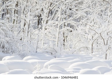 Snow covered forest in the wither in New England,