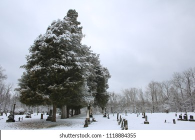 Snow covered graves with trees