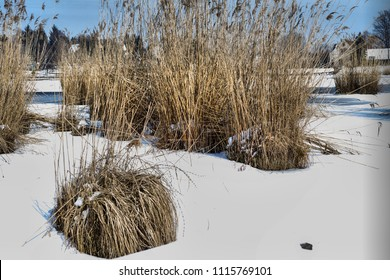 Snow covered lakeshore with some reed goups near a fishing lake in Diosjeno, Hungary