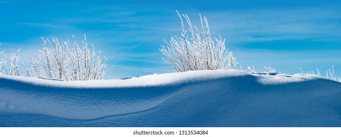 snow covered landscape close up
