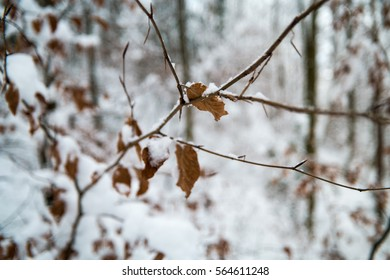 Snow covered leaves in a forrest during winter