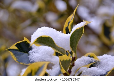 snow covered leaves on a tree