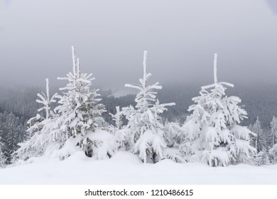Snow covered little fir trees in a row.