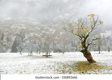 Snow covered maple trees standing on the meadow by the mountainside on a foggy gloomy morning ~ Beautiful scenery of frosted maple trees & the first snow in deep autumn in Austrian Alps ~ Frozen world